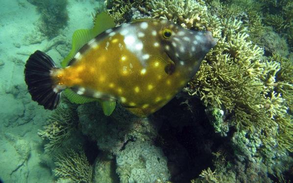 Coral Vivo 5