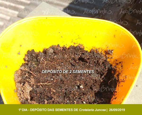 CROTALARIA_SUSBTRATO_01