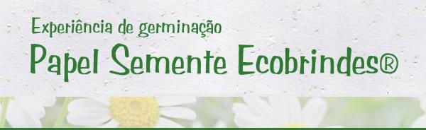 BASE_PAPEL_SEMENTE_MARGARIDA